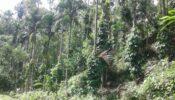 কুলাউড়ায় পানজুম নিয়ে দু'পক্ষের মধ্যে টানটান উত্তেজনা-থানায় অভিযোগ দায়ের